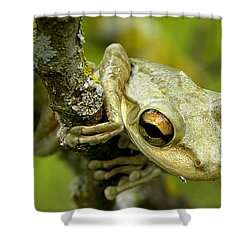 Cuban Tree Frog  Shower Curtain