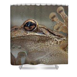 Cuban Treefrog Shower Curtain