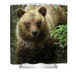 Cubby Shower Curtain