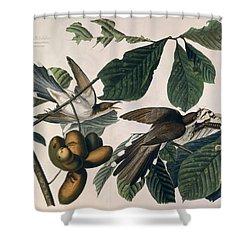Cuckoo Shower Curtain by John James Audubon