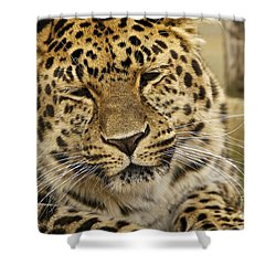 Shower Curtain featuring the photograph Cuddles  by Gary Bridger