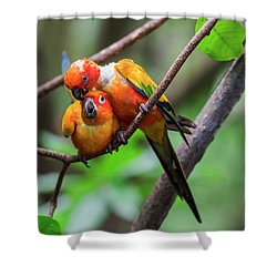 Shower Curtain featuring the photograph Cuddling Parrots by Pradeep Raja Prints