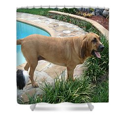 Cujo And Lucky By The Pool Shower Curtain by Val Oconnor