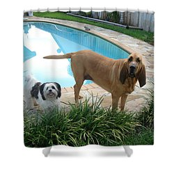 Cujo And Lucky Shower Curtain by Val Oconnor