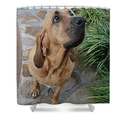 Cujo Looking At A Butterfly Shower Curtain by Val Oconnor