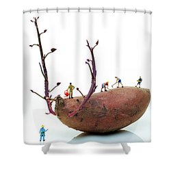Cultivation On A Sweet Potato Shower Curtain by Paul Ge