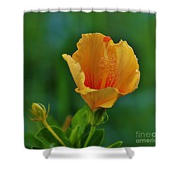 Cup Of Honey Shower Curtain by Craig Wood