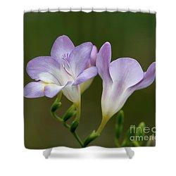 Cupertino Lavender Freesias Shower Curtain