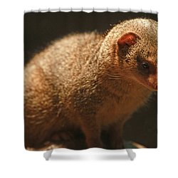 Shower Curtain featuring the photograph Curiosity At Rest by Laddie Halupa