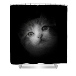 Shower Curtain featuring the photograph Curiosity by Betty Northcutt