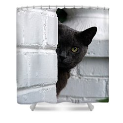 Curiosity Shower Curtain by Robert Meanor