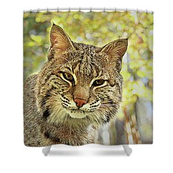 Shower Curtain featuring the photograph Curiosity The Bobcat by Jessica Brawley