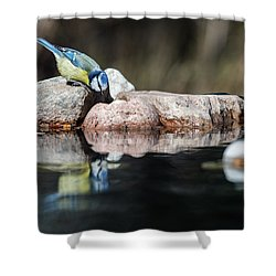 Curious Blue Tit Shower Curtain by Torbjorn Swenelius