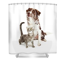 Curious Cat And Dog Looking Up Shower Curtain