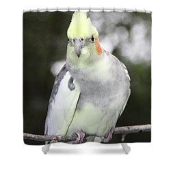 Curious Cockatiel Shower Curtain