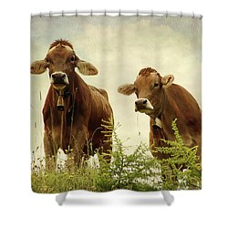Curious Cows Shower Curtain