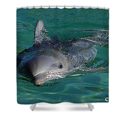 Curious Dolphin Shower Curtain by Gary Crockett