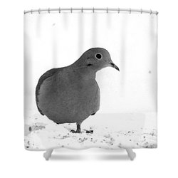 Curious Dove Shower Curtain