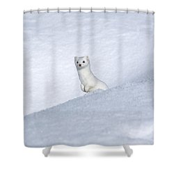 Curious Ermin Shower Curtain