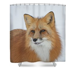 Curious Fox Shower Curtain