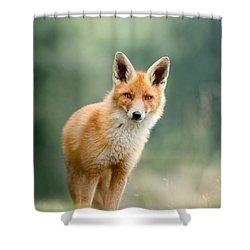 Curious Fox Shower Curtain by Roeselien Raimond