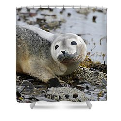 Curious Harbor Seal Pup Shower Curtain
