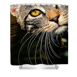 Curious Kitten Shower Curtain by Meirion Matthias