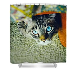 Shower Curtain featuring the photograph Curious Kitty by Silvia Ganora