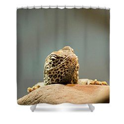 Curious Lizard Shower Curtain