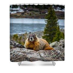 Curious Marmot Shower Curtain