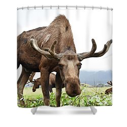 Curious Moose Shower Curtain