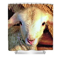 Curious Newborn Lamb Shower Curtain