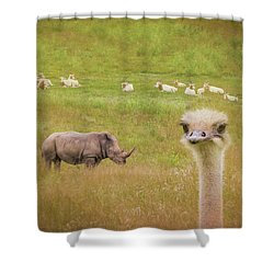 Curious Ostrich And White Rhino Shower Curtain