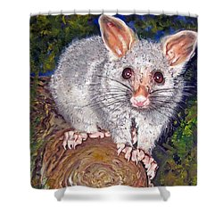 Curious Possum  Shower Curtain