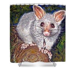 Curious Possum  Shower Curtain