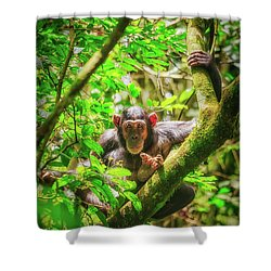 Shower Curtain featuring the photograph Curious by Rick Furmanek