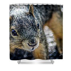 Shower Curtain featuring the photograph Curious Squirrel by Joann Copeland-Paul