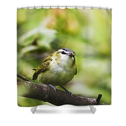 Curious Vireo Shower Curtain by Christina Rollo