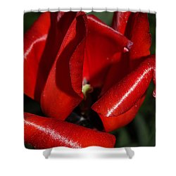 Curly Red Tulip Shower Curtain
