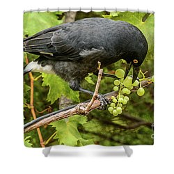 Currawong On A Vine Shower Curtain