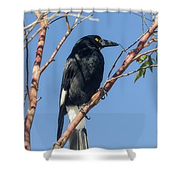 Currawong Shower Curtain by Werner Padarin