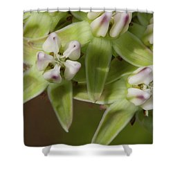 Curtiss' Milkweed #4 Shower Curtain