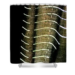 Curvilinear Shower Curtain