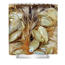 Cut Pumpkin - Pumpkin Seeds Shower Curtain by Michal Boubin