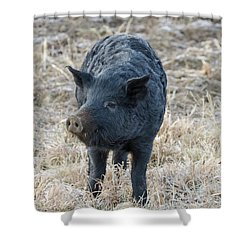 Shower Curtain featuring the photograph Cute Black Pig by James BO Insogna