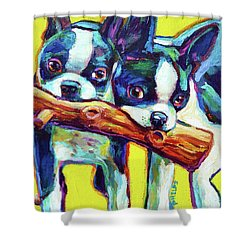 Cute Boston Terriers Shower Curtain by Robert Phelps