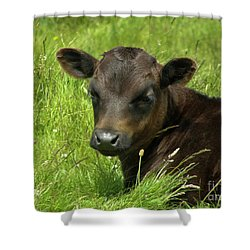 Cute Cow Shower Curtain by Terri Waters