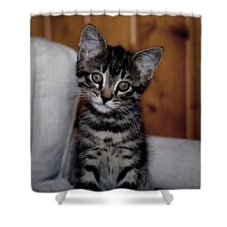 Shower Curtain featuring the photograph Cute by Laura Melis