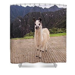 Cute Llama Posing For Picture Shower Curtain