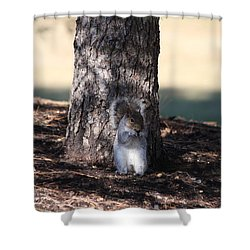 Shower Curtain featuring the photograph Cute Squirrel by Vadim Levin